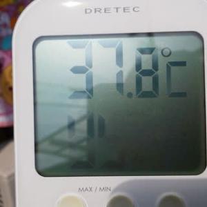 ホンマかいな? 37.8℃