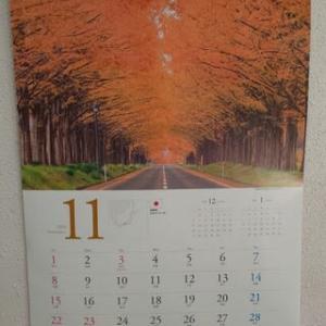 ただ今、見頃です。 ~ メタセコイア並木の紅葉