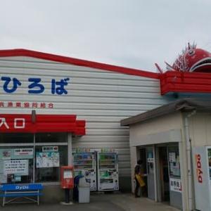 潮干狩り ~ 愛知県南知多町 大井鳶ヶ崎潮干狩り場