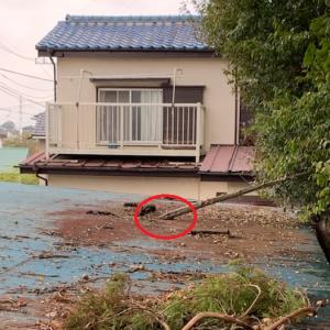 不動産投資家が賃貸駐車場の屋根にあがって修繕した話
