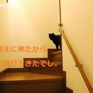 やっぱり猫よね~