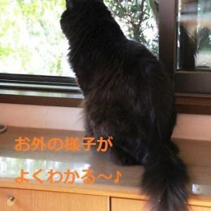 見張り役付きで本猫は楽しんだようです♪