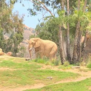 隣で飛んでたオスプレイと象