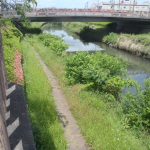 日本一汚いと言われている芝川