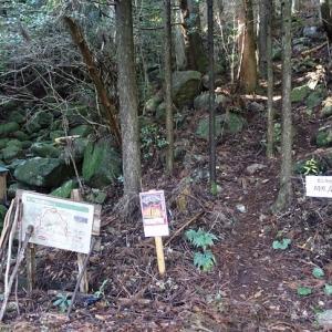 2020年干支の山―子ノ泊山(ねのとまりやま:907m)
