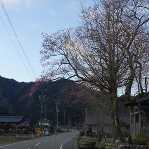 東洞岳(1,052m)〜シシ洞(1,109m) 調査登山