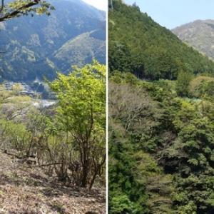 揖斐川源流部への入口―飯盛山(745m)、西津汲(793m)