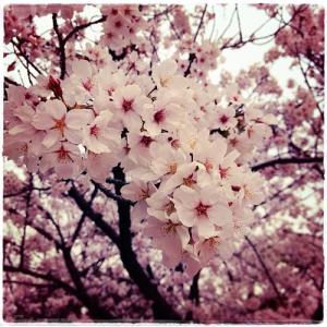 ☆桜さんぽ☆