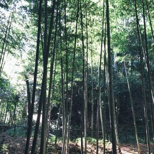 竹林管理の学びに行ってきたよ