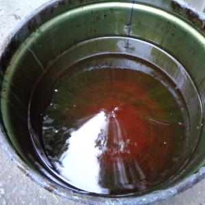 ハイオク天ぷら廃油の回収 / 天ぷらカーの燃料を70L確保