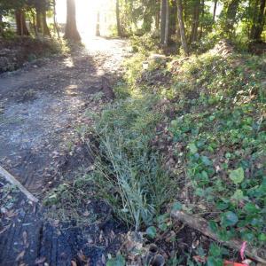 大地の再生 結の作業 in 滋賀 に参加して来ました。大地と木々の声を聞きながら・・・