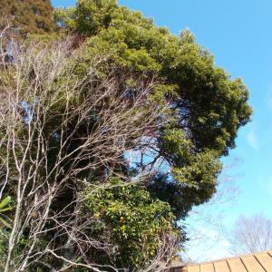 木こりの仕事 - 伐採の見積もりが立て続けに入り、ちょっとだけブルーな気分(笑)