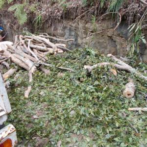 伐採作業で回収してきた枝葉と幹は、薪と環境改善(水脈改善)に活用します。