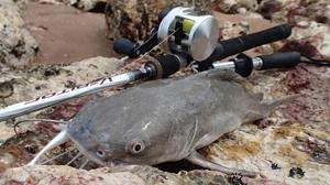 Barramundi #1189 Catfish #50 Zerek Flat Shad 110mm