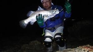 61cm Barramundi #1206 Yo-zuri Pin's Minnow 90mm