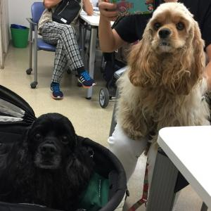 犬のコンタクトレンズ&両親の入院