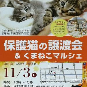 保護猫の譲渡会&くまねこマルシェ