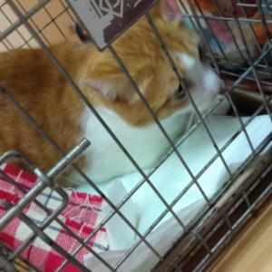 本日の保護猫譲渡会
