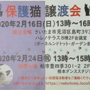 【2月24日】保護猫 譲渡会