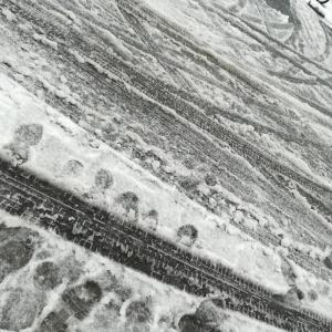 雪の中、動物病院へ