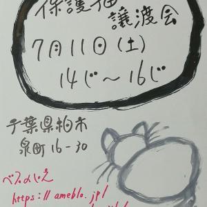 【千葉県柏市】保護猫譲渡会【7月11日】