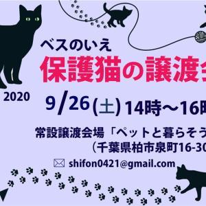 【9月26日】保護猫譲渡会【千葉県柏市】