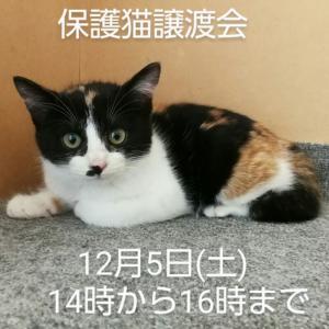 本日、千葉県柏市で保護猫譲渡会