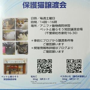 【松ねこ&ベスのいえ保護猫譲渡会】9月25日(土)14時から16時まで