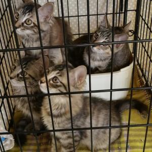 【10月16日】今日の保護猫譲渡会
