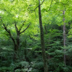 樹々の息吹と自然界の残酷