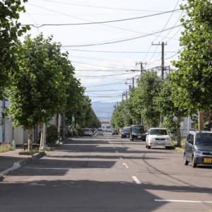 弥生坂の横通りと道端の風景
