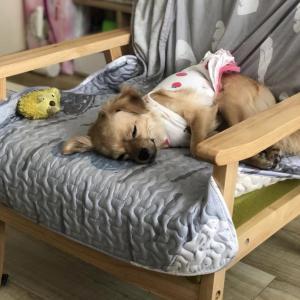 疲れてます