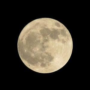 満月の所為か