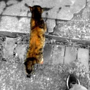 猫と散歩をしたい