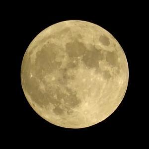 月を拝みながら