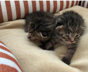 新赤ちゃん猫2匹