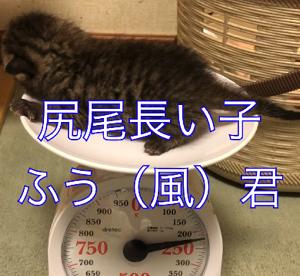 赤ちゃん猫の仮の名前