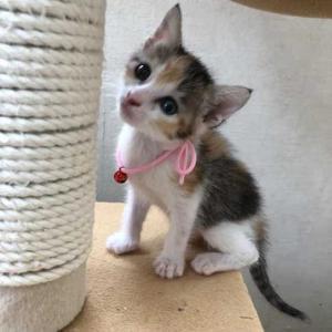 赤ちゃん猫12匹の様子