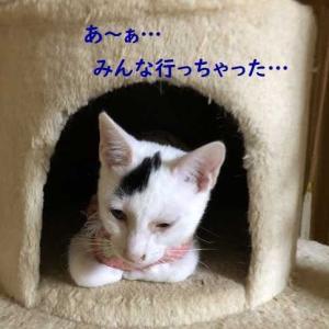 5匹兄妹の子猫たち、みんなそれぞれ新しいお家に行きました!