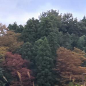 秋を感じながらの早朝ウォーキング