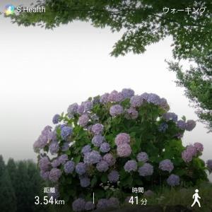 梅雨ですが早朝ウォーキング(^^♪