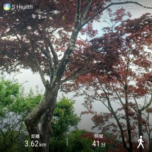 今日は空が明るい✩.*˚