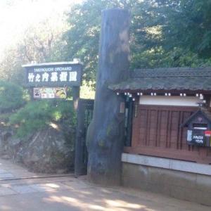 市川市の竹之内果樹園さんでの栗拾いが台風の影響で中止