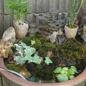 陶器製の植木鉢の底を塞いでミニビオトープを作ってみました