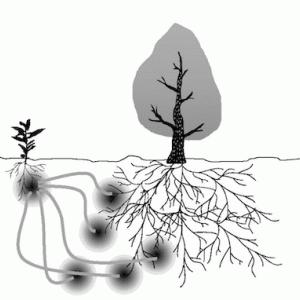 【家庭菜園】 菌根菌の世界。3。