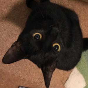 妻が猛反対!娘が保護した黒猫の運命