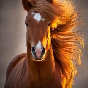 肉食系からヴィーガンへ「長旅は痩せ馬を選べ」