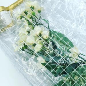 「植物ビニールバッグ☆」キラリ本日のおすすめ
