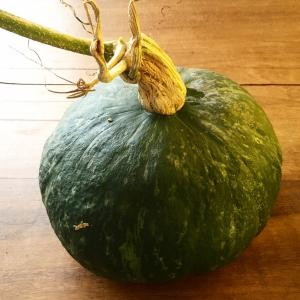 木の上にあったカボチャを収穫、明日はグラタン作る予定☆
