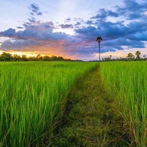 *カンボジアで恋をして*